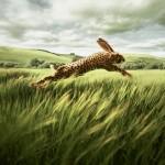 gepard hase (1)
